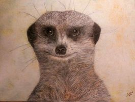 Meercat by Dances-With-Wolves
