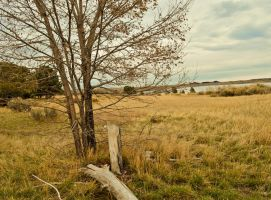 autumn at Cherry Creek Park by bloody-magpies