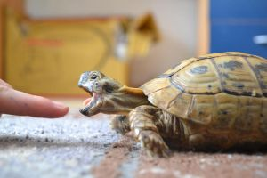 turtle by YELENA-K