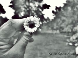 One flower to remember... by 3divine