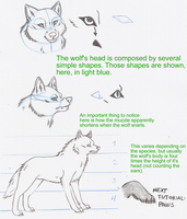 Wolf Tutorial- Face by aurora-colle