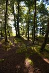 Forest 2 by CAStock
