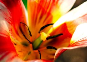 Pistil by m3tzgore