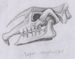 Skull of Indricotherium by InkOut