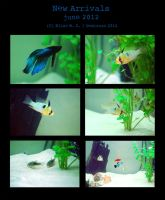 Fishies - New Arrivals - june2012 by oomizuao
