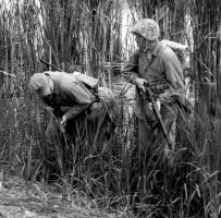 Marines in Tall Grass by WestytheTraveler