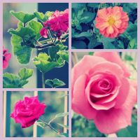 Flowers Collage by Juandii