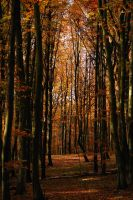 beechen forest II by Wilithin