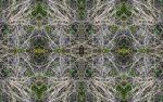 YL12 Organic Psychedelic Wallpaper 2 1920 x 1200 by d3c0d3r
