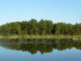 Lake and trees by repiano