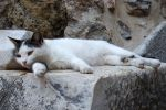 Reclining kitty 1 - Ephesus by wildplaces