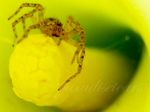 Why, Hello Mr. Spider. by ParadiseTears