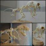Dinosaur Articulation Finished! by aquiafin
