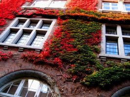 Windows in the fall by PipFish