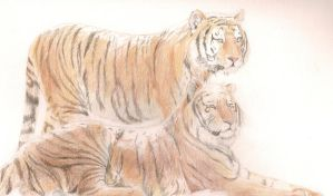 tigers of Siber........ia by inner-etch
