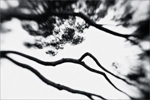 the japanese tree by sundreaming