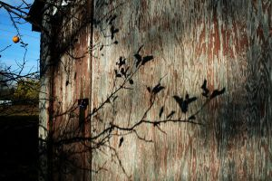 Shadows of Branches by x-hellothere