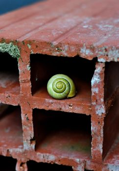 Snail by CatchMePictures