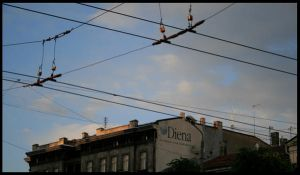 Diena by liberate-your-mind