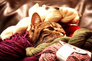 A Knitter's Cat by MysticMagicks