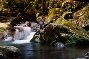 forest Waterfall II by raven9999