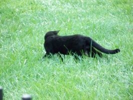 Cat in the grass by GimpTron