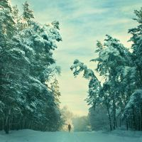 Welcome to Our White Forest by Astranat