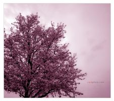 Spring 11 by cenkphoto
