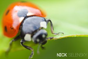 Another ladybird by Nick356