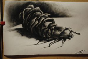 pine cone beetle by nothinghere87