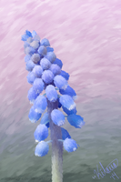 Grape Hyacinth by WayvDesigns