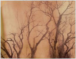 Directions by JillAuville