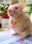 funny hamster 2 by florina23