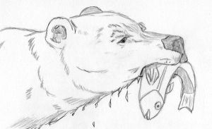 Bear Sketch by nutzi66