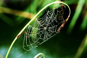 Spider Web by SpiffyPhotography