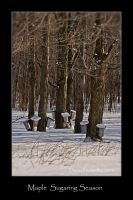 Maple Sugaring Season by Mystik-Rider