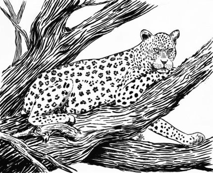 Leopard by doctor-morbius