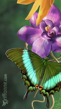 Butterfly and purple flower WIP by joanniegoulet