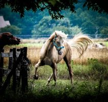 Horses by mikeheer