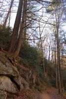 Harpers Falls Trails by bryceworley