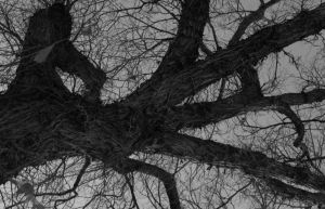 Tree, black and white 1 by Lady-Lilith0666