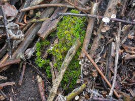 Moss and Fungus by Sanluris