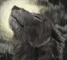 Wolf In The Rain by Jedi-Cowgirl