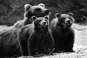 bear family by lomapatta