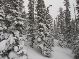 Snow covered pine forest by MerlinOfManitou