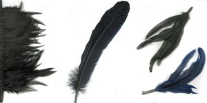 Stock: Feathers by neato-stock