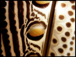 Argus Pheasant Feather - Close up by CabinetCuriosities