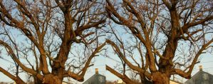 trees in stereoscope by hamdiggy