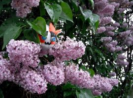 Puggle in the lilacs by Kenthayle