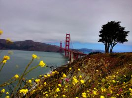 Golden Gate Bridge on a Summer's day by Mad-Twatter